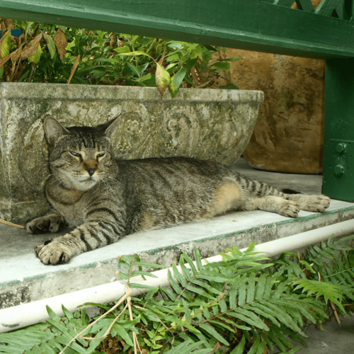Photograph of a six-toed cat