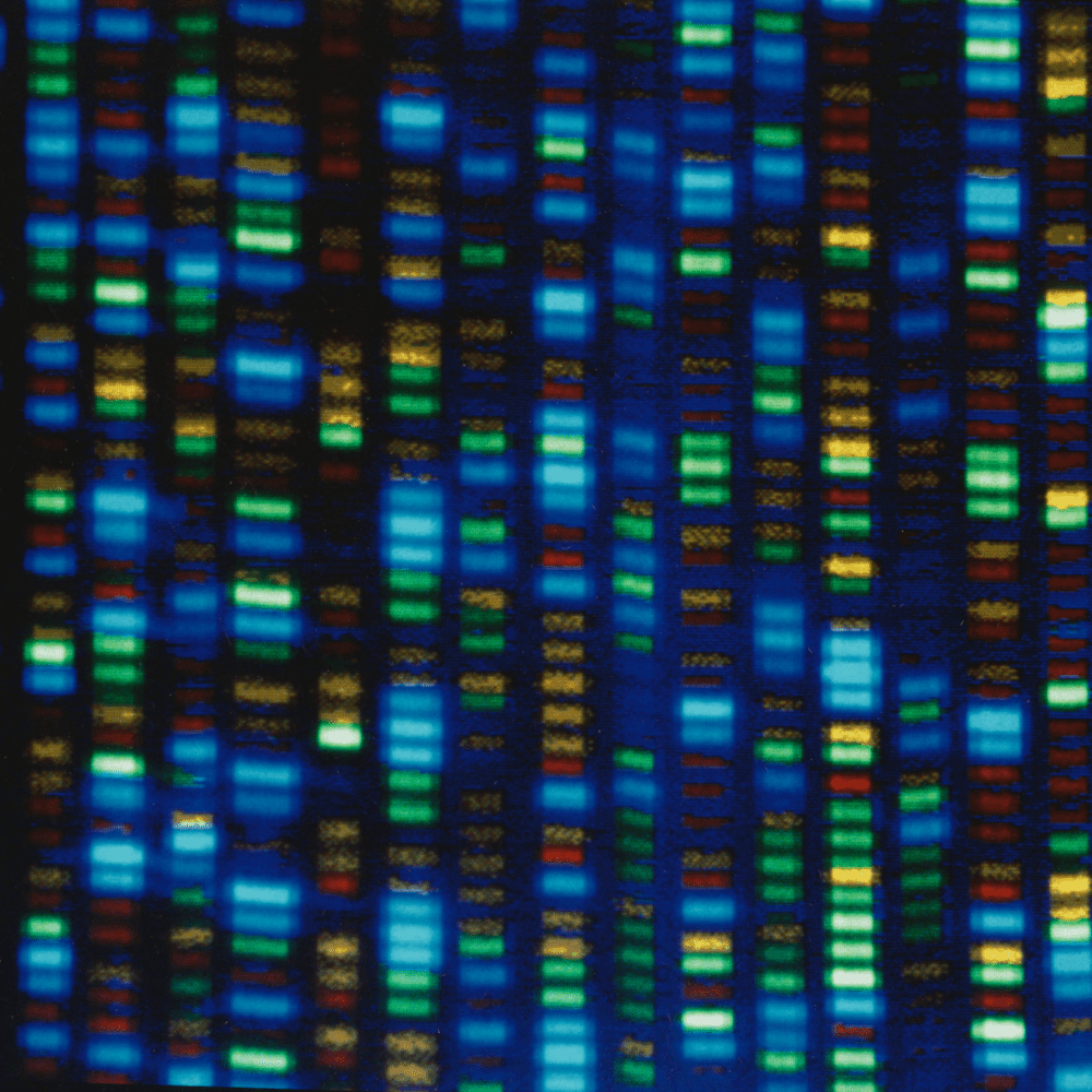 Output from a ABI373 DNA sequencer