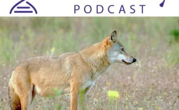Image of a wolf below the Heredity Podcast logo