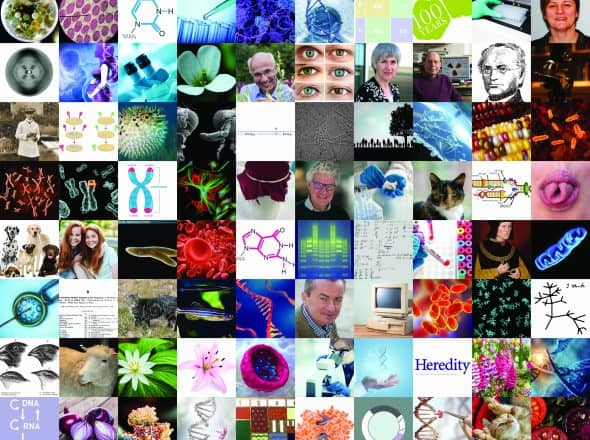 Image for Heredity Special Issue: 100 Years of Genetics