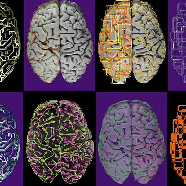 The human brain with illustrated details