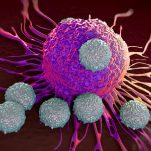 Microscope image of immune system cells