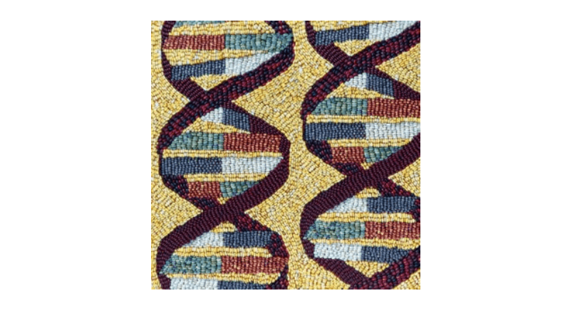 A portion of a mosaic made of different colors of maize (corn) kernels depicting DNA. Credit: Jason Wallace CC-BY-SA-4.0